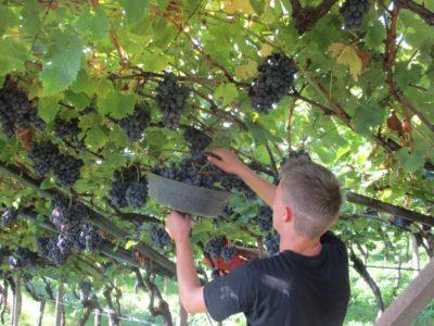 Weinhof Tholr Ferienwohnungen